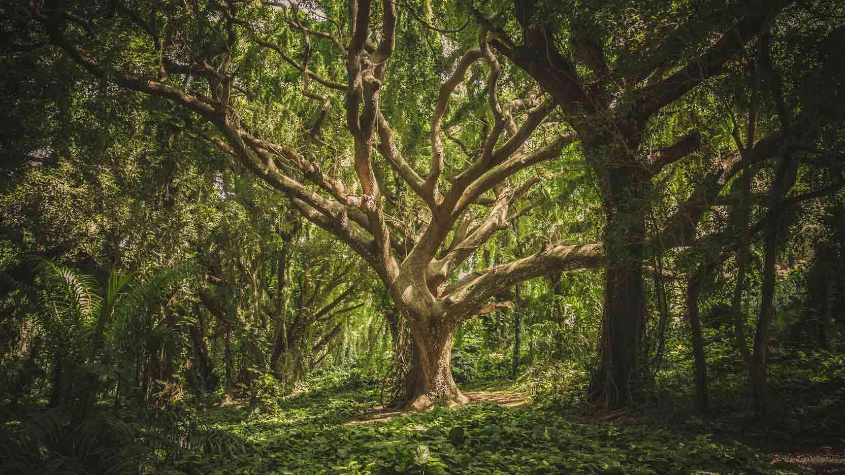 Ossabois sera au rendez-vous de la RE2020 et soutient le plan Ambition Bois Construction 2030