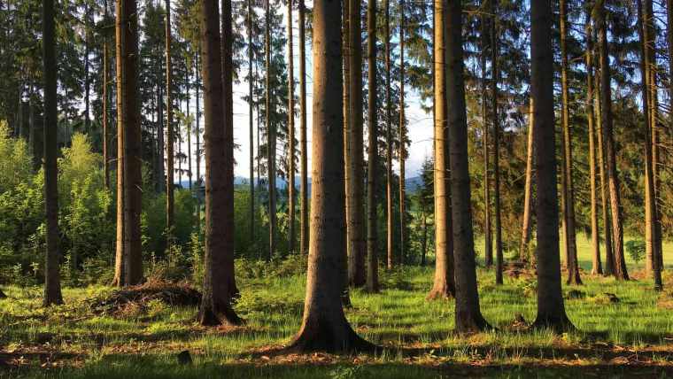 Prendre soin des forêts pour lutter contre le réchauffement climatique !